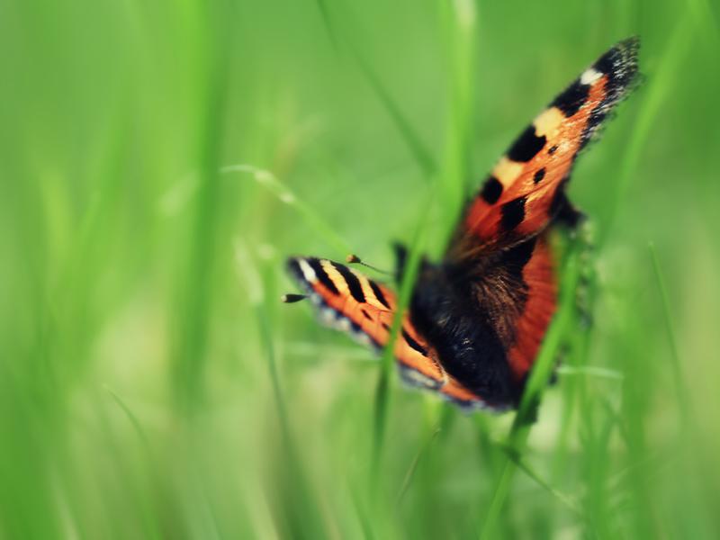 Hintergrundbild - kostenlos - Frühling - Bildschirm ...