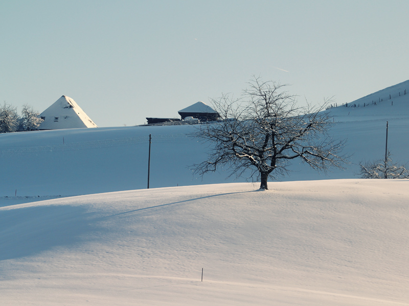 winter 108 hintergrundbild gratis - photo #30
