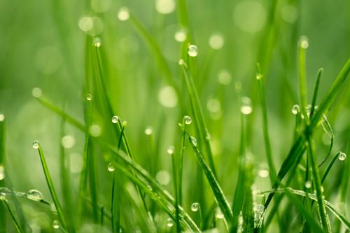 Gräser Bild - kostenlos - Gras Foto - gratis