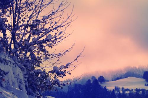 winterlandschaft  kostenloses winter bild  gratis foto