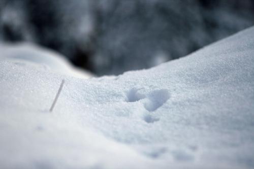Schneebild Kostenloses Schnee Foto Gratis Winter Bild