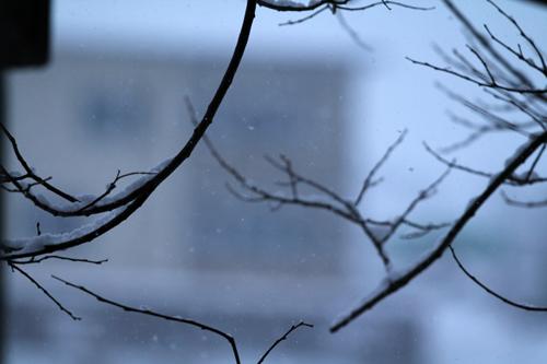 Schneeflocken Kostenloses Winterbild Gratis Winter Foto